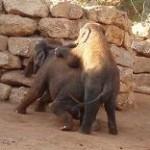 wippende olifanten Jeruzalem zoo