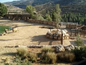 rhino's giraffe jerusalem zoo