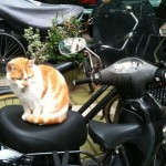 red-white cat sitting on scooter