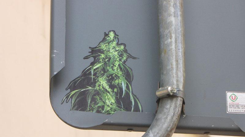 cannabis sticker Vilnius