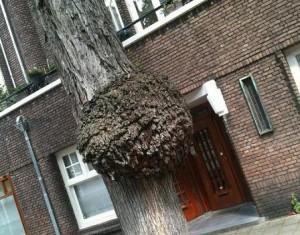 'parasiet op boom'