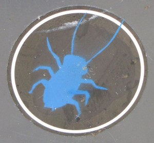sticker bug roach 2014 June Arnhem insect